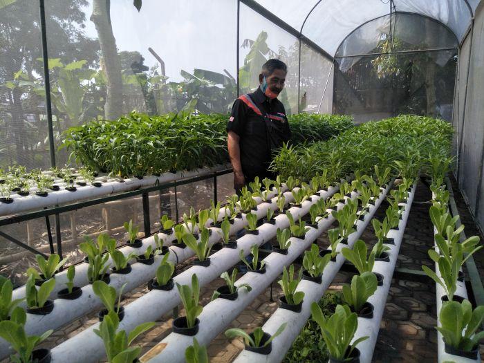 Kisah Sekelompok Warga Bandung Berhasil Terapkan Konsep Urban Farming